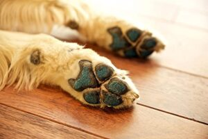 DOGS ARTHRITIS