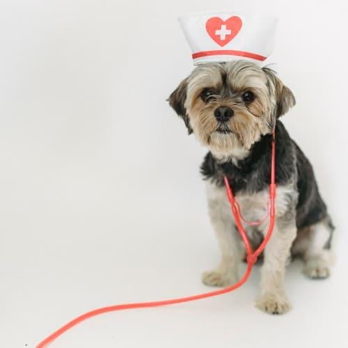 Dog Health Supplies